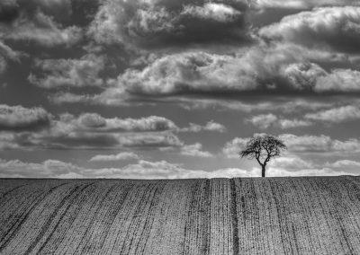Knoeppel-Alexander_#112_Linien, Baum und Wolken