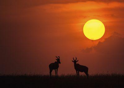 Knoeppel-Alexander_Sonnenuntergang in der afrikanischen Savanne_FdM_2019-08